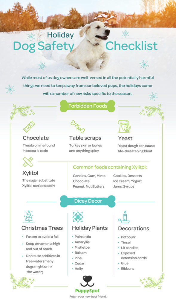 holidays, infographic