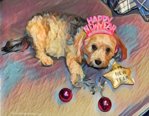 dogs, designer dogs, Yorkipoo, yorkie poo, digital art, pet portrait, Happy New Year