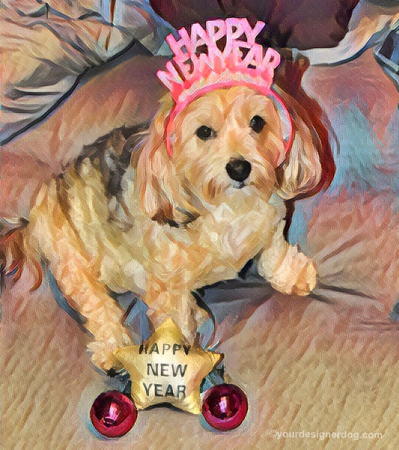 dogs, designer dogs, Yorkipoo, yorkie poo, digital art, pet portrait, Happy New Year