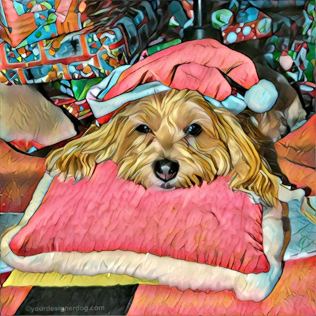 dogs, designer dogs, Yorkipoo, yorkie poo, digital art, pet portrait, Christmas, Santa, Christmas Tree