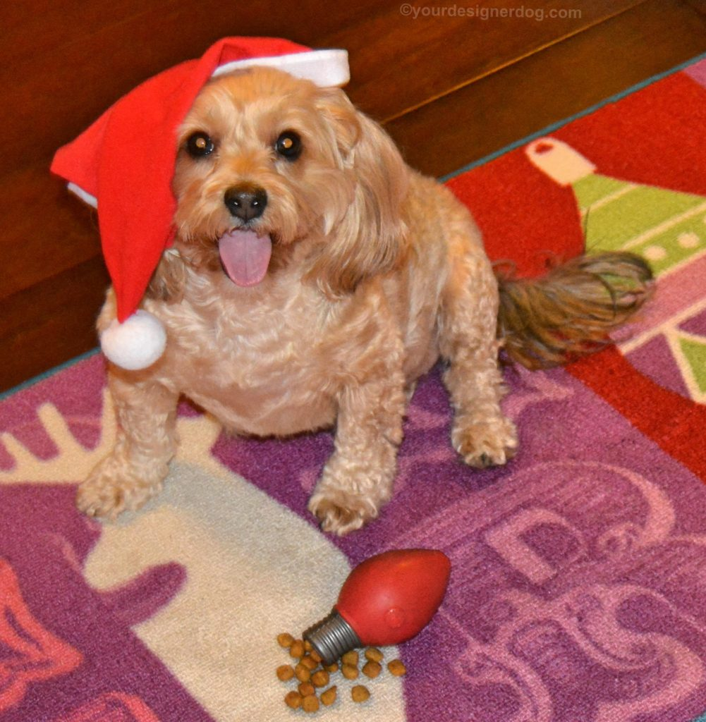 dogs, designer dogs, Yorkipoo, yorkie poo, santa, holiday, kibble, dry dog food