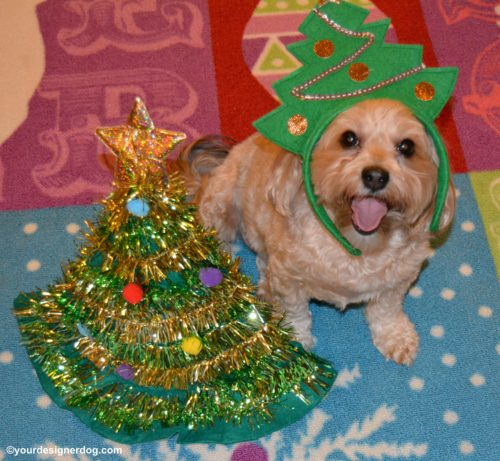 dogs, designer dogs, Yorkipoo, yorkie poo, Christmas tree, tongue out