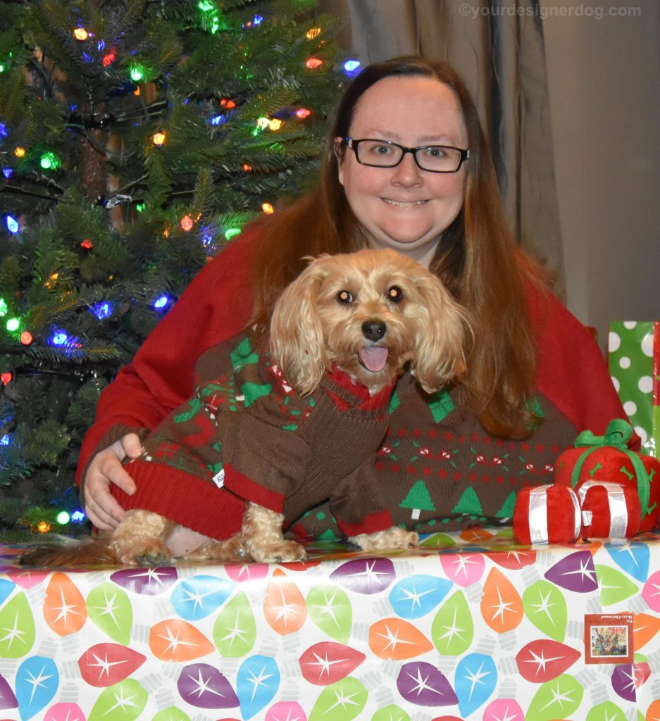 dogs, designer dogs, Yorkipoo, yorkie poo, christmas, presents, twins, ugly Christmas sweater, Christmas Tree