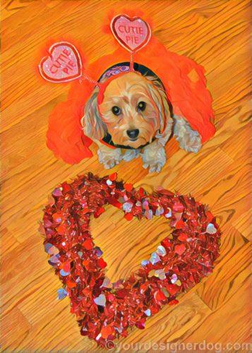 dogs, designer dogs, Yorkipoo, yorkie poo, love bug, cutie pie, digital art, pet portrait, Valentine's Day
