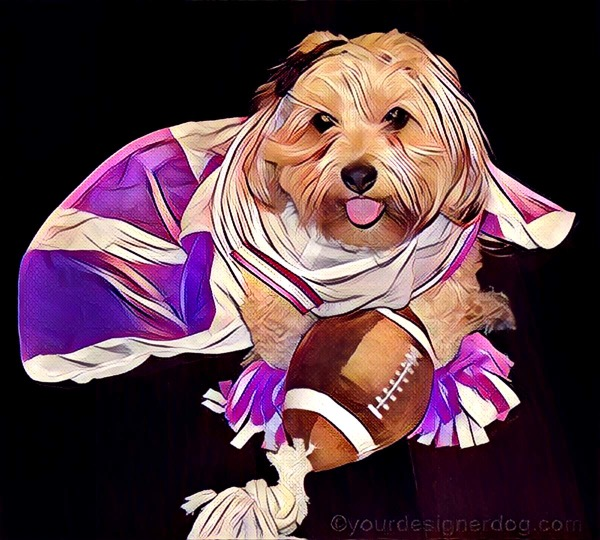 dogs, designer dogs, Yorkipoo, yorkie poo, digital art, pet portrait, cheerleader, football, Super Bowl, Puppy Bowl