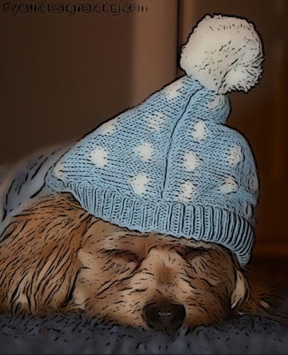 dogs, designer dogs, Yorkipoo, yorkie poo, sleepy puppy, digital art, pet portrait, winter hat