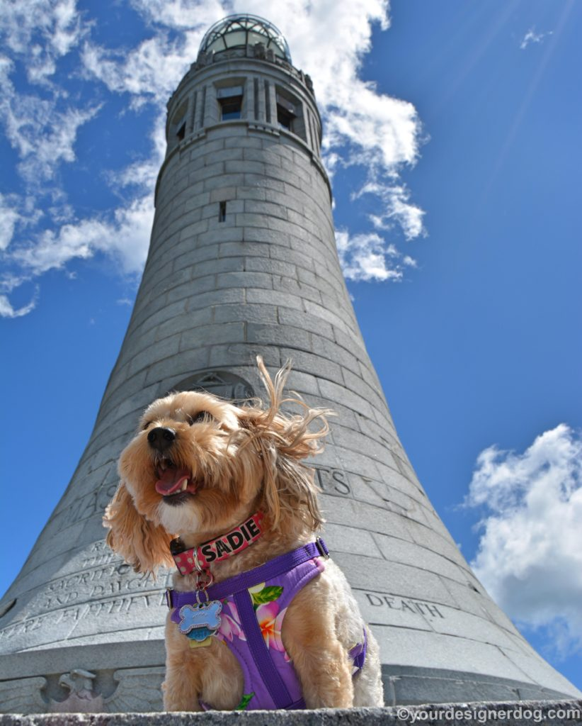 dogs, designer dogs, Yorkipoo, yorkie poo, monument, Mount Greylock, dog smiling