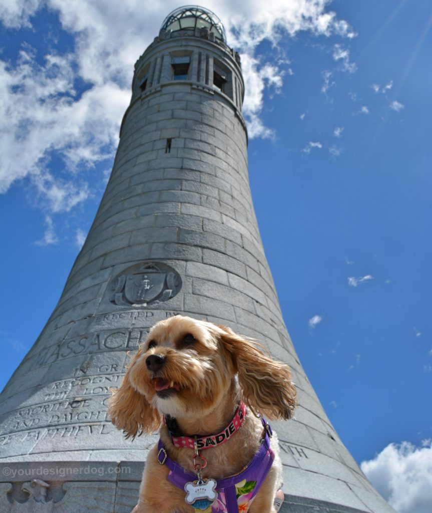 dogs, designer dogs, Yorkipoo, yorkie poo, monument, Mount Greylock, dog smiling