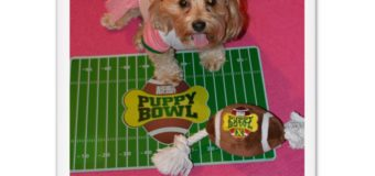 5 Reasons the Puppy Bowl is Better than the Super Bowl