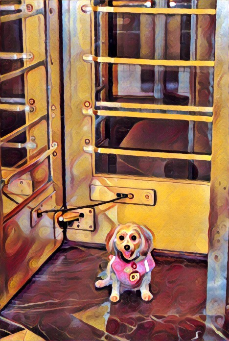 dogs, designer dogs, Yorkipoo, yorkie poo, doorway, revolving door, digital art, pet portrait
