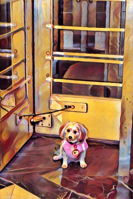 dogs, designer dogs, Yorkipoo, yorkie poo, doorway, revolving door, digital art, pet portrait