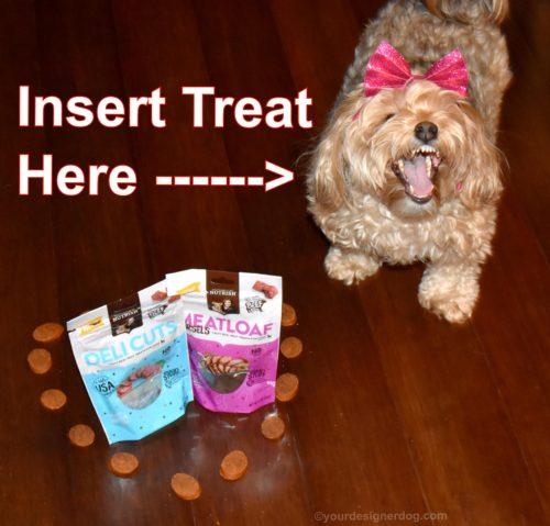 dogs, designer dogs, Yorkipoo, yorkie poo, dog treats, Chewy.com, Rachel Ray