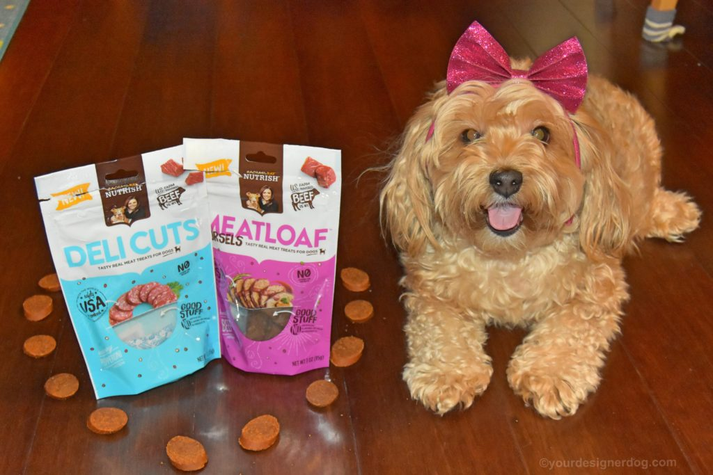 dogs, designer dogs, Yorkipoo, yorkie poo, dog treats, Chewy.com, Rachael Ray