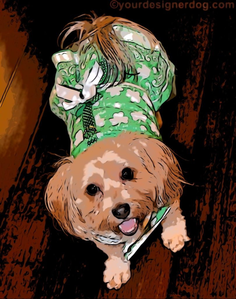 dogs, designer dogs, Yorkipoo, yorkie poo, digital art, pet portrait, St. Patrick's Day, dog dress, harness dress