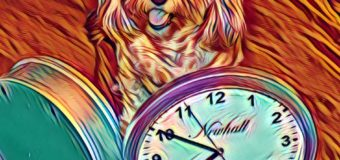Caturday Art – Daylight Savings