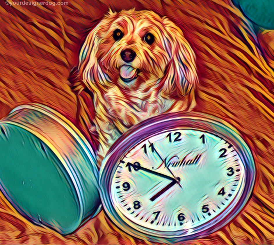 dogs, designer dogs, Yorkipoo, yorkie poo, digital art, pet portrait, clock, daylight savings, Spring forward