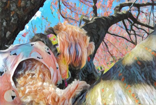 dogs, designer dogs, Yorkipoo, yorkie poo, tree, cherry blossom, Arbor Day, digital art, pet portrait, dog in a tree