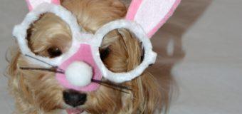 Bunny Selfies!