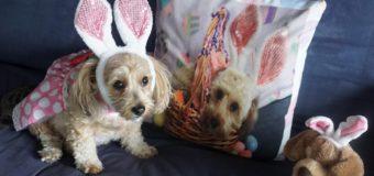 Easter Look Alikes!