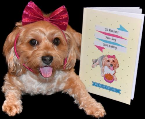 dogs, designer dogs, Yorkipoo, yorkie poo, selfie, dog book