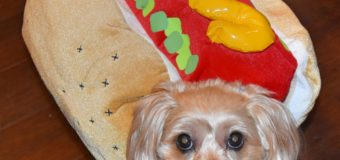 Take a Look at My Hot Dog!