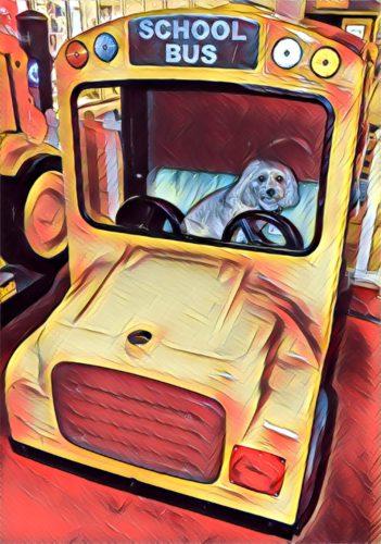 dogs, designer dogs, yorkipoo, yorkie poo, school bus, digital art, pet portrait, back to school