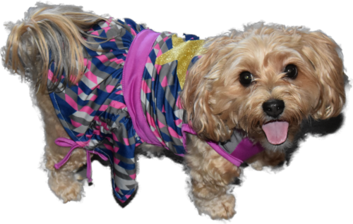 dogs, designer dogs, yorkipoo, yorkie poo, dog dress, dog smiling, tongue out