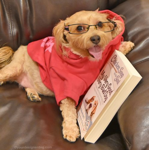 dogs, designer dogs, yorkipoo, yorkie poo, book review, chicken soup for the soul, dog wearing glasses