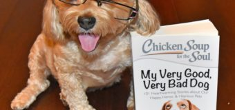 Warm, Fuzzy Feelings with Chicken Soup for the Soul: My Very Good, Very Bad Dog