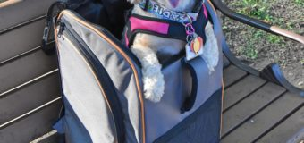 The Versatile Lambo Pet Carrier from Pet Magasin