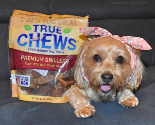 dogs, designer dogs, yorkipoo, yorkie poo, true chews, dog treats, steak