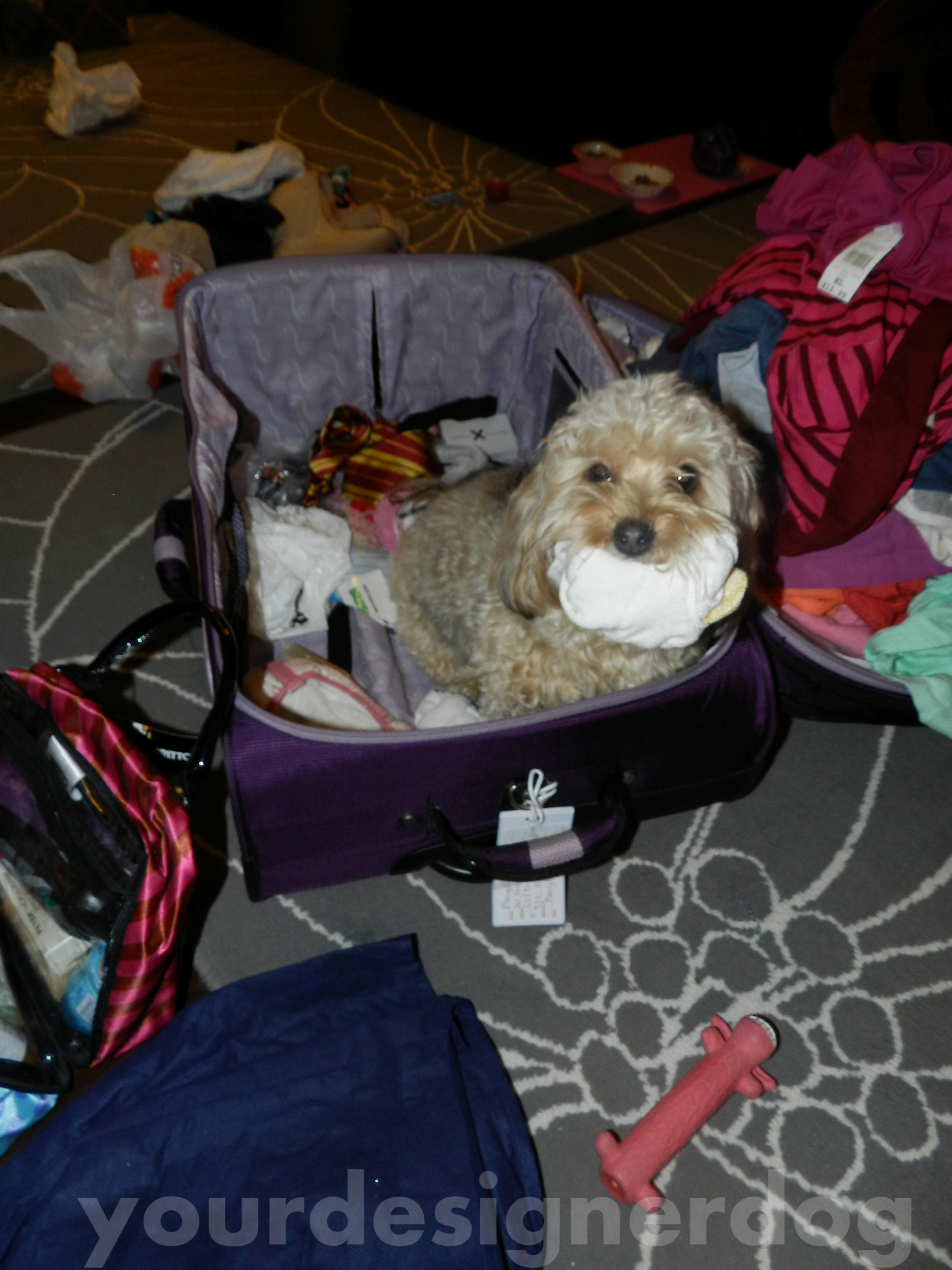 You Can't Leave Without Socks!