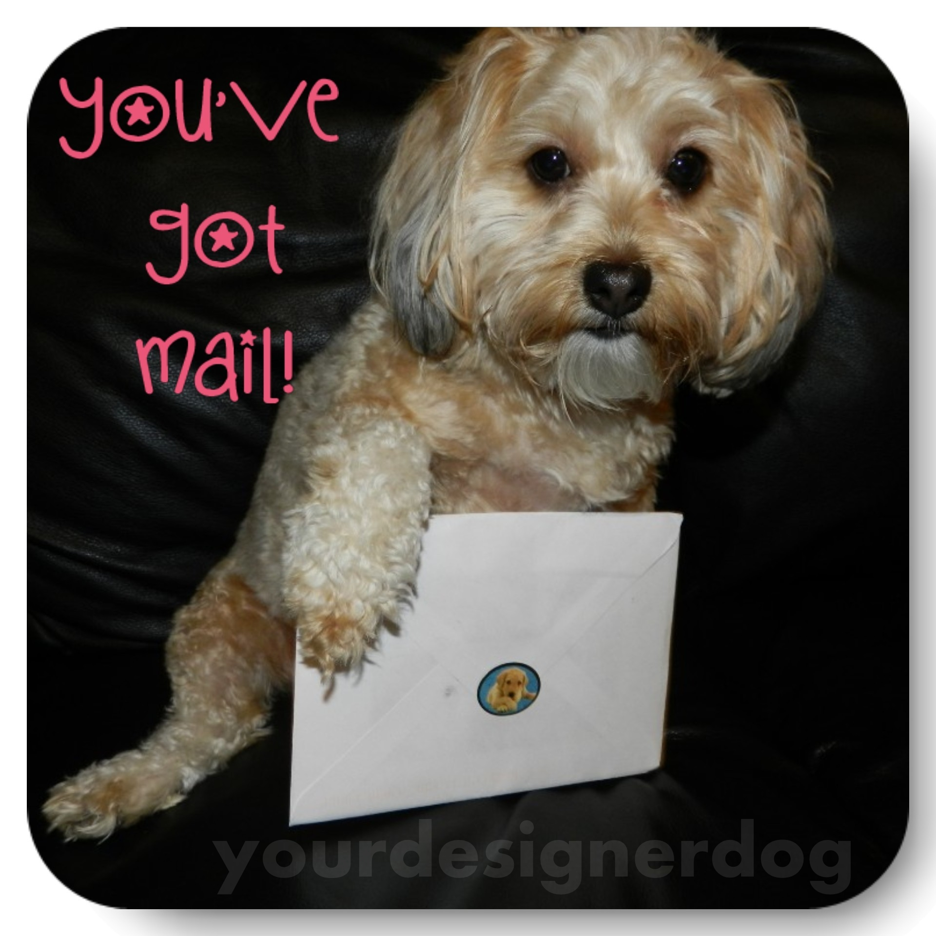 dogs, designer dogs, yorkipoo, yorkie poo, email, envelope