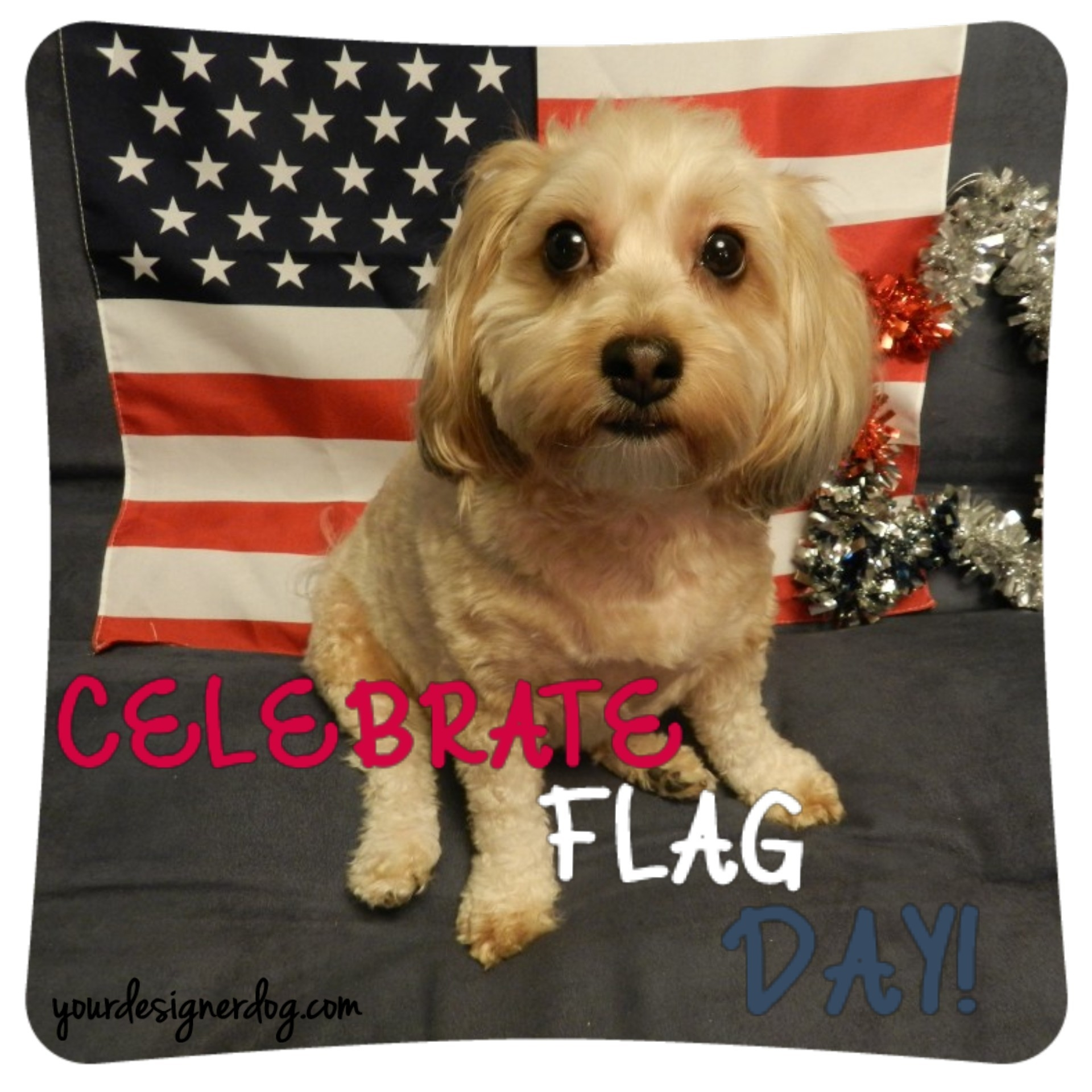 Celebrate Flag Day!