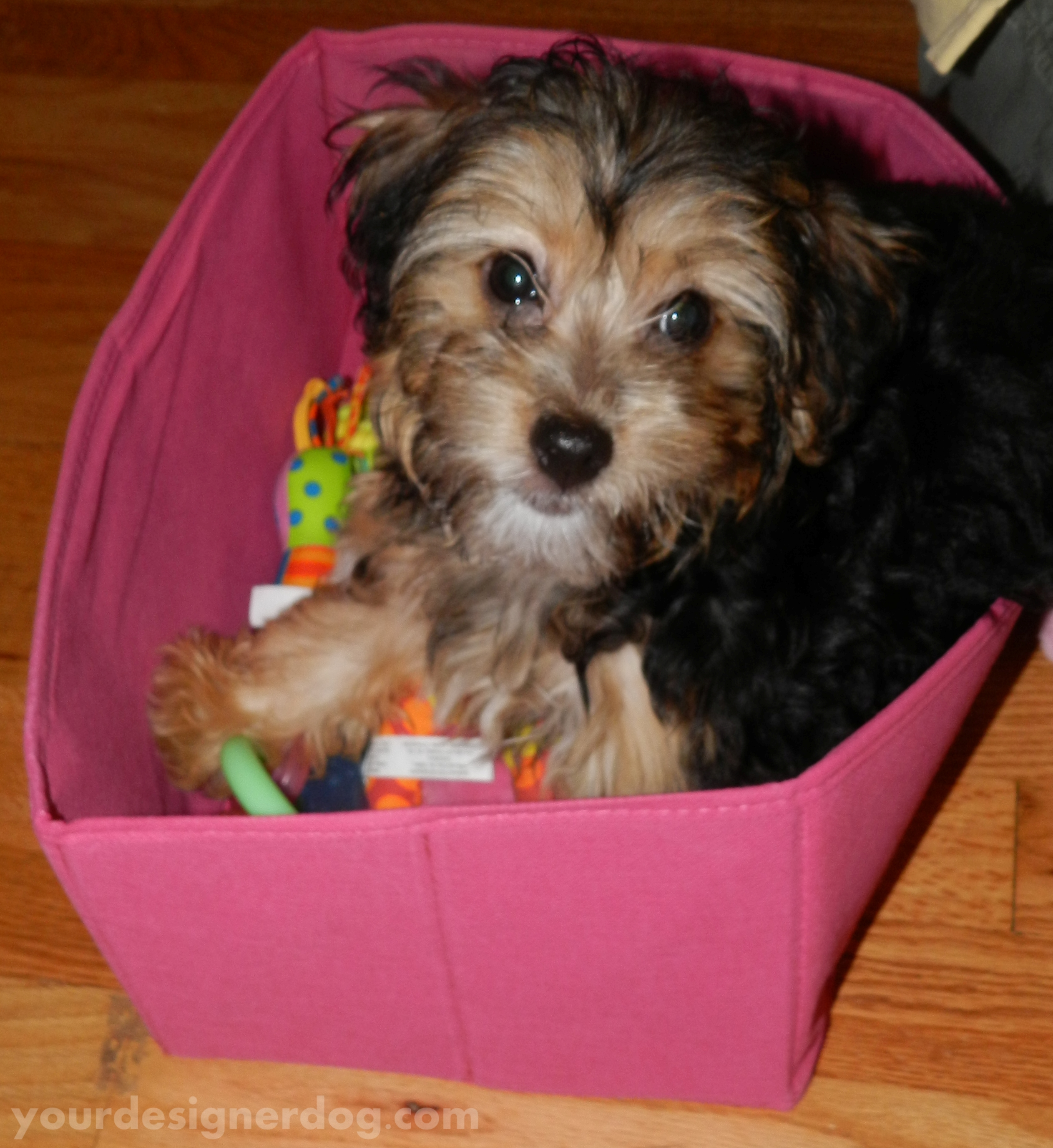 Toy Box or Box Toy