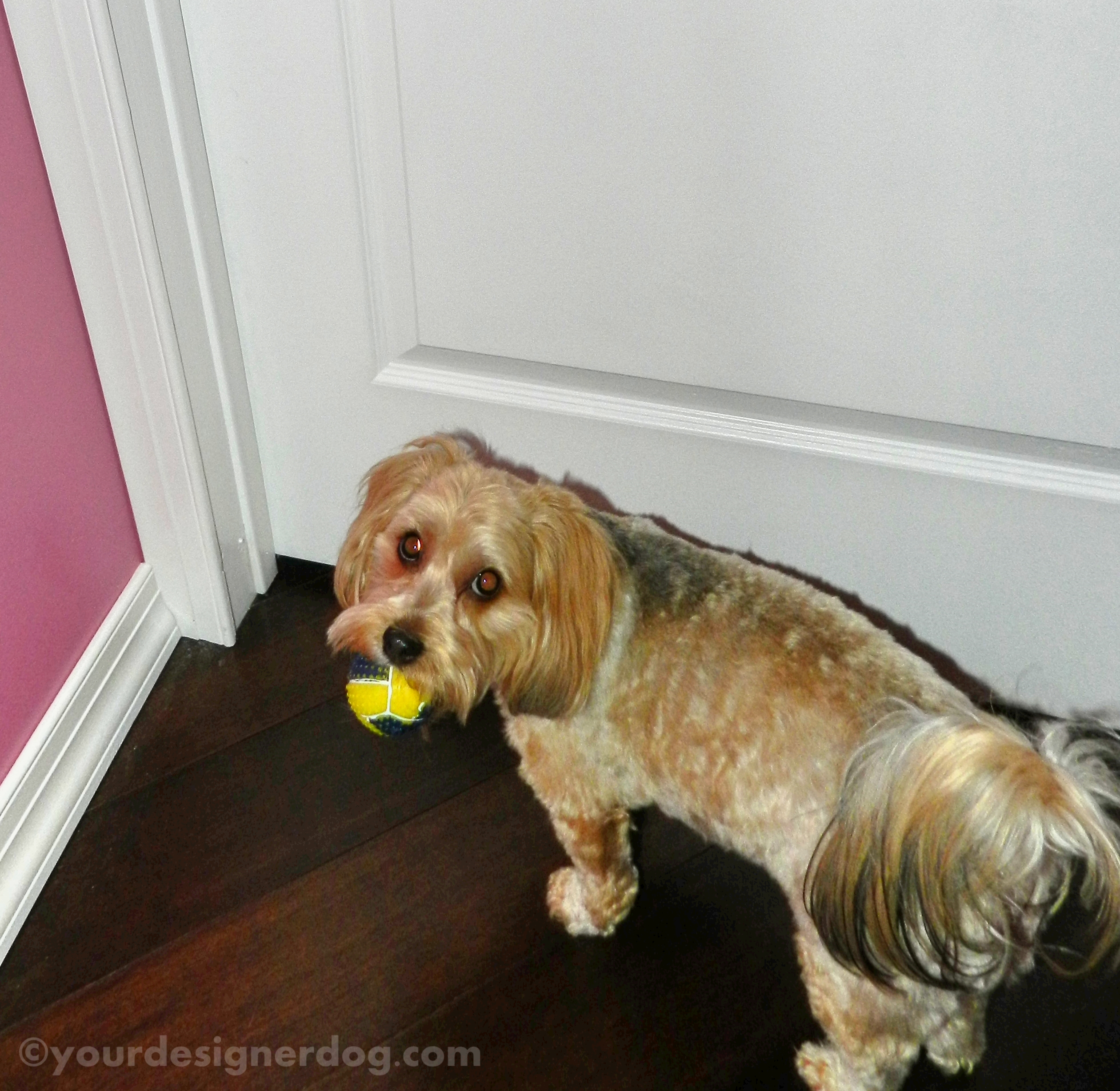 Please Mom, I Desperately Need a New Toy!