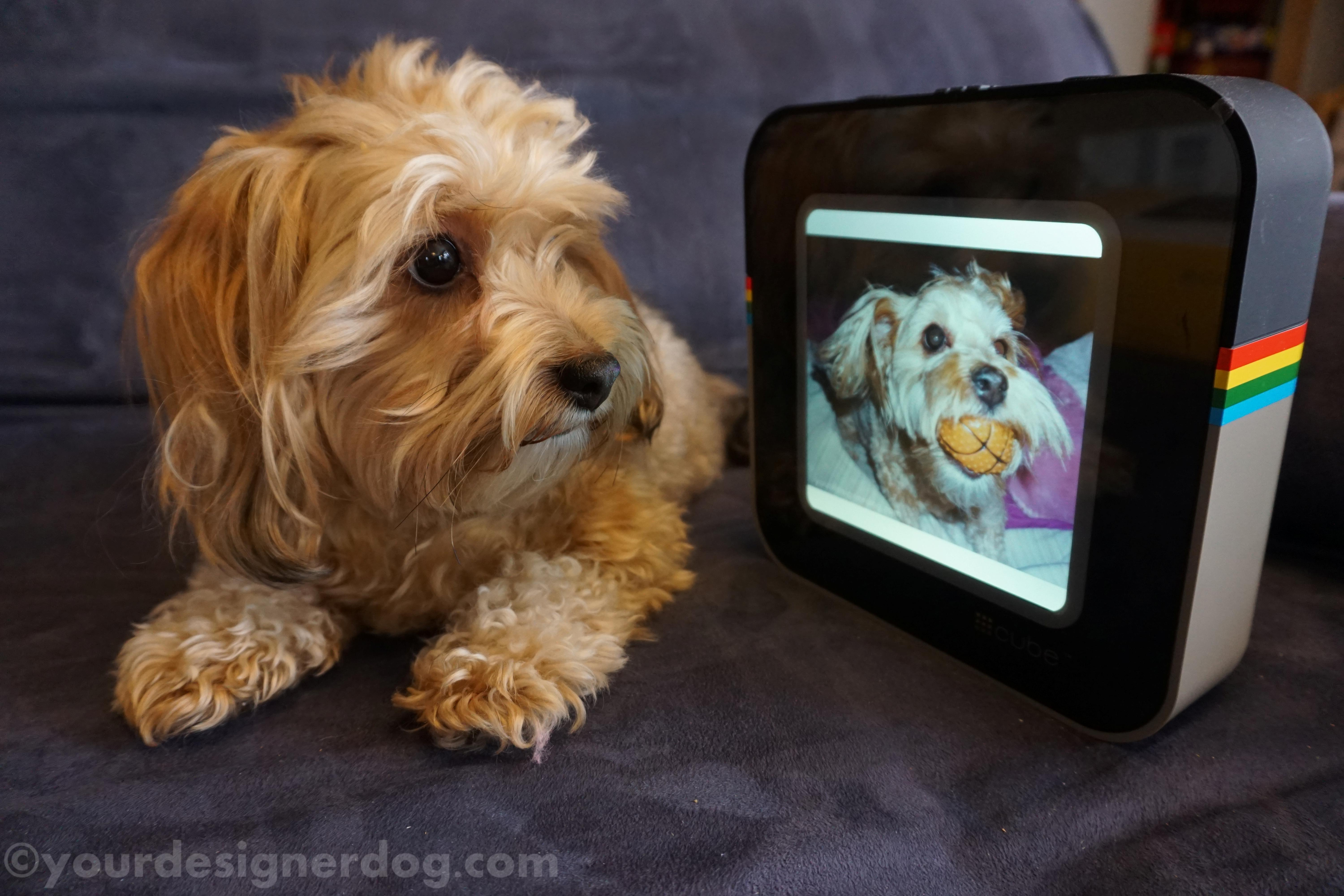 #Cube – The Digital Picture Frame for Instagram