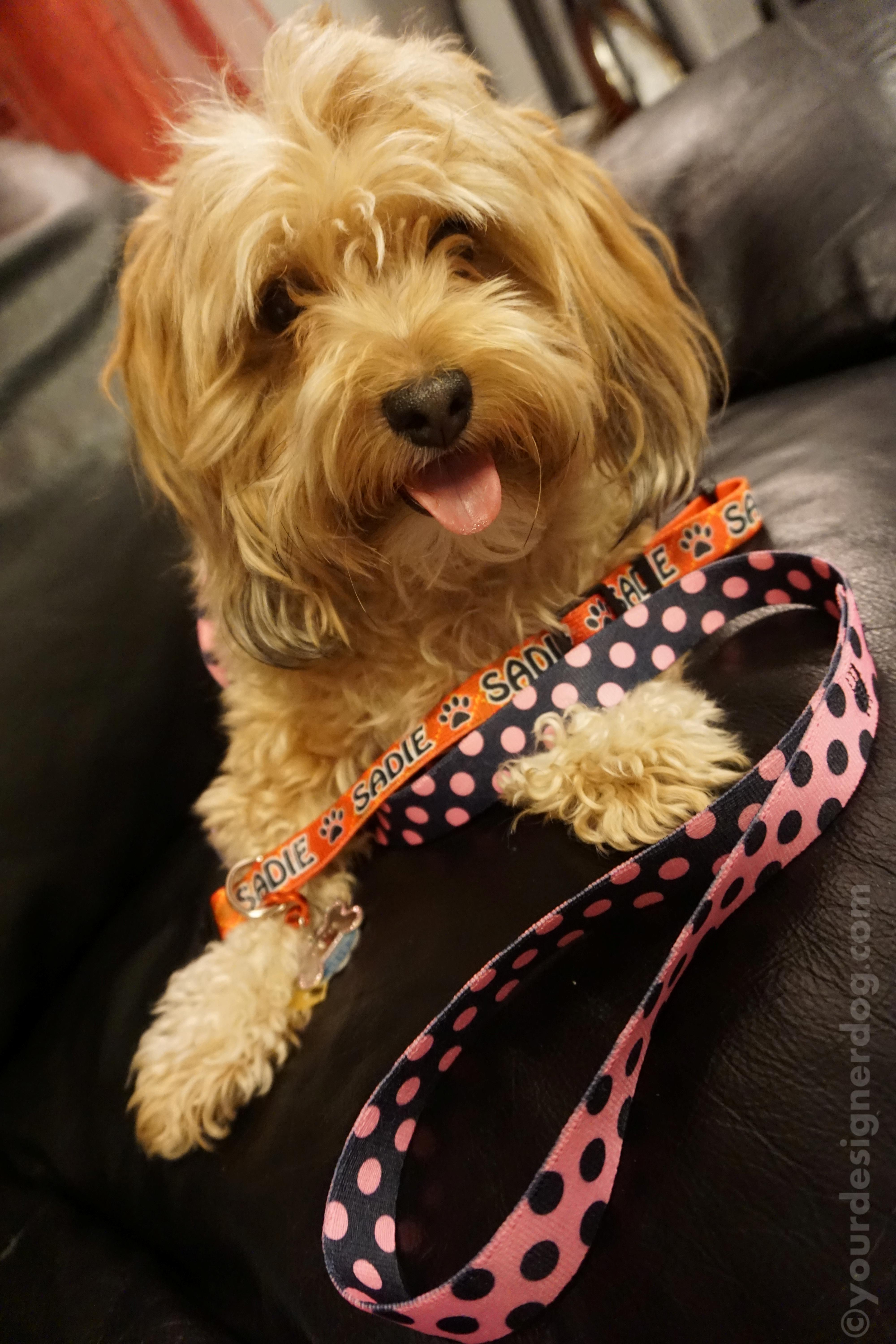 Hot Dog Collars – a Review and a Contest!