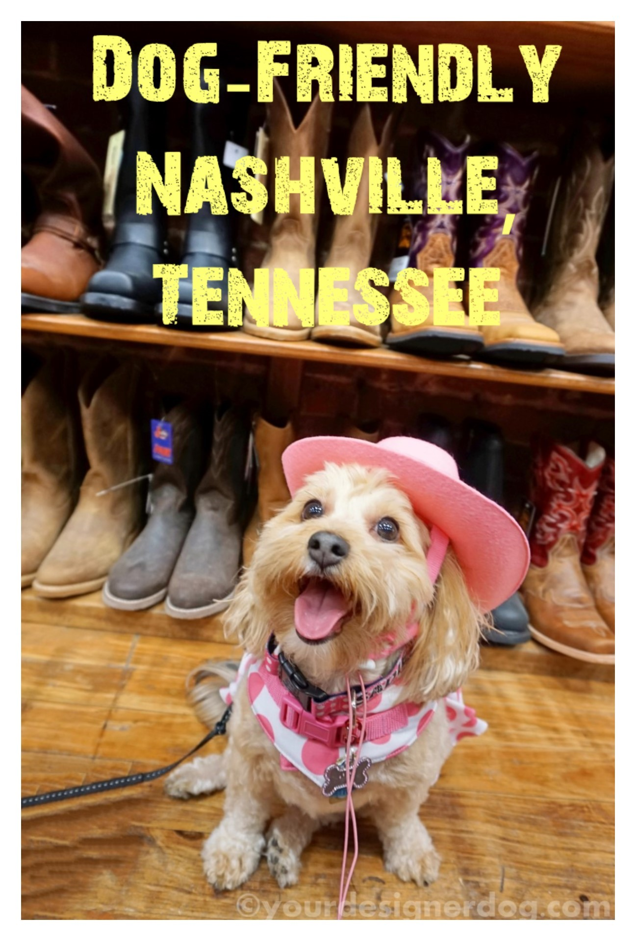 Dog-Friendly Nashville, Tennessee