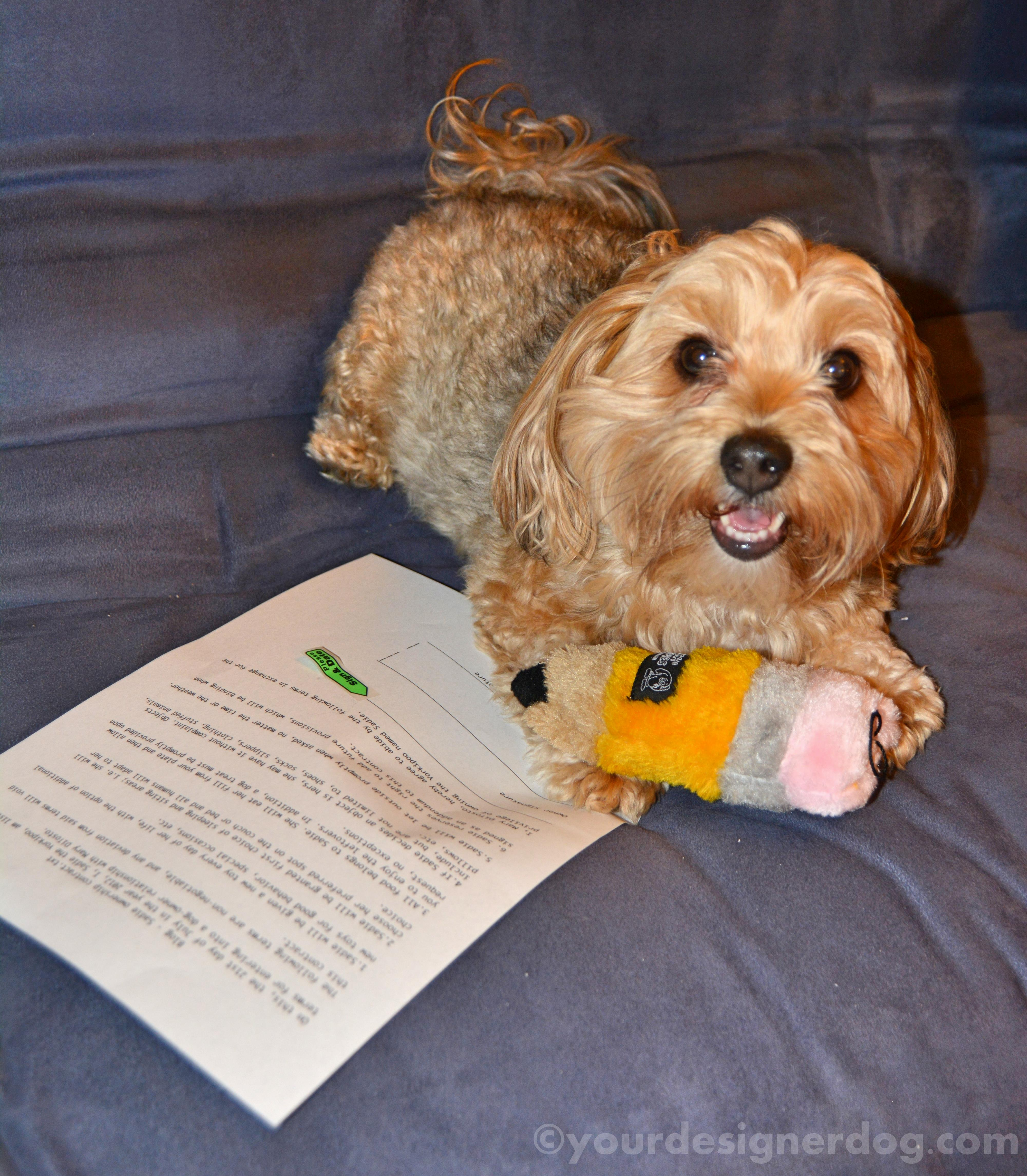 The Ownership Contract by Sadie the Yorkipoo