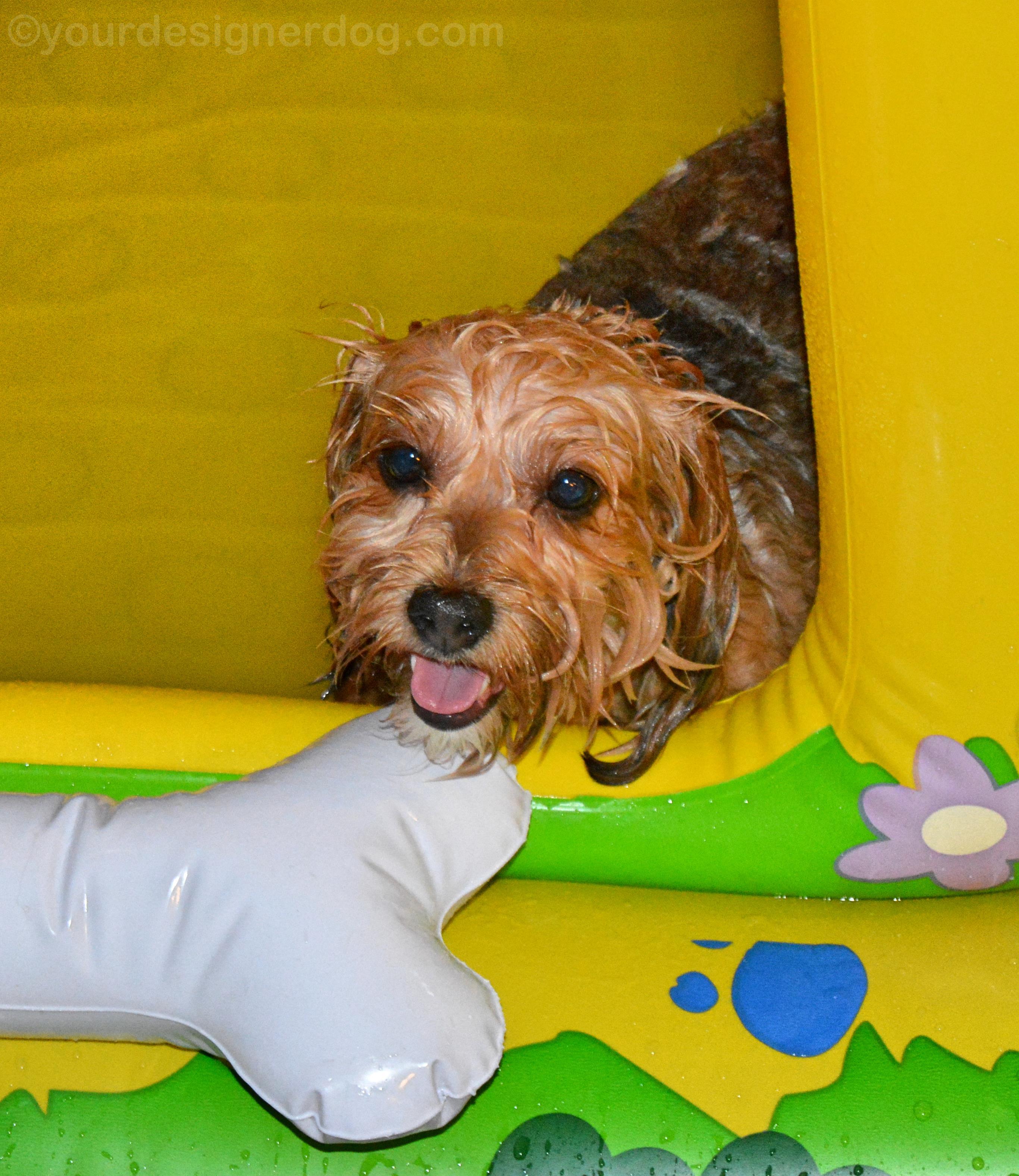 Dog House Bath