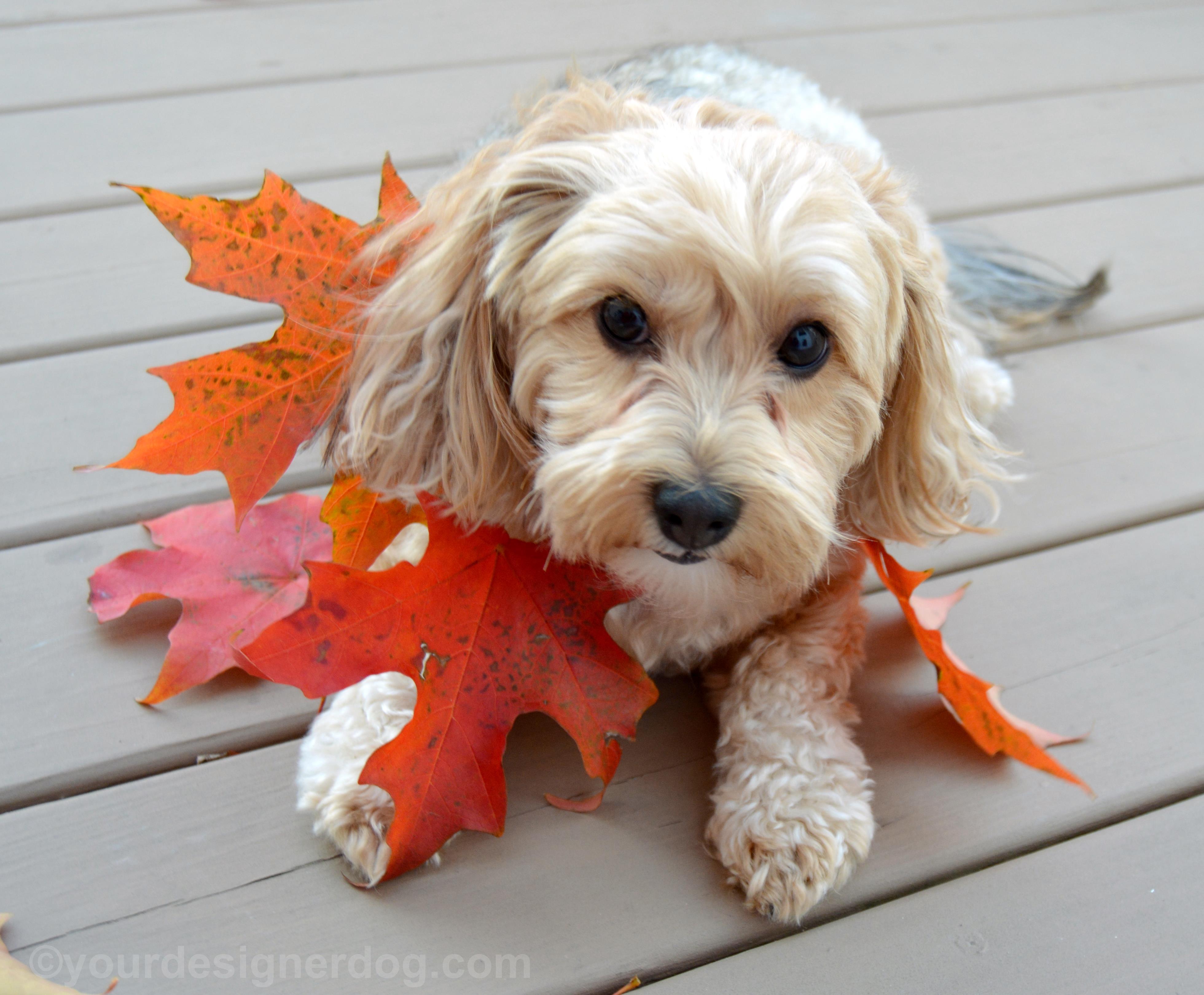 Sadie's DIY Leaf Necklace