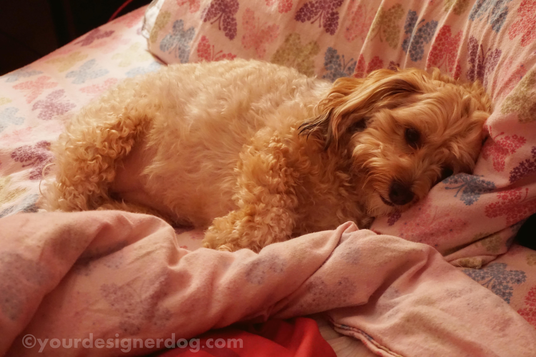 Where Do I Sleep? – #DogMomProblems