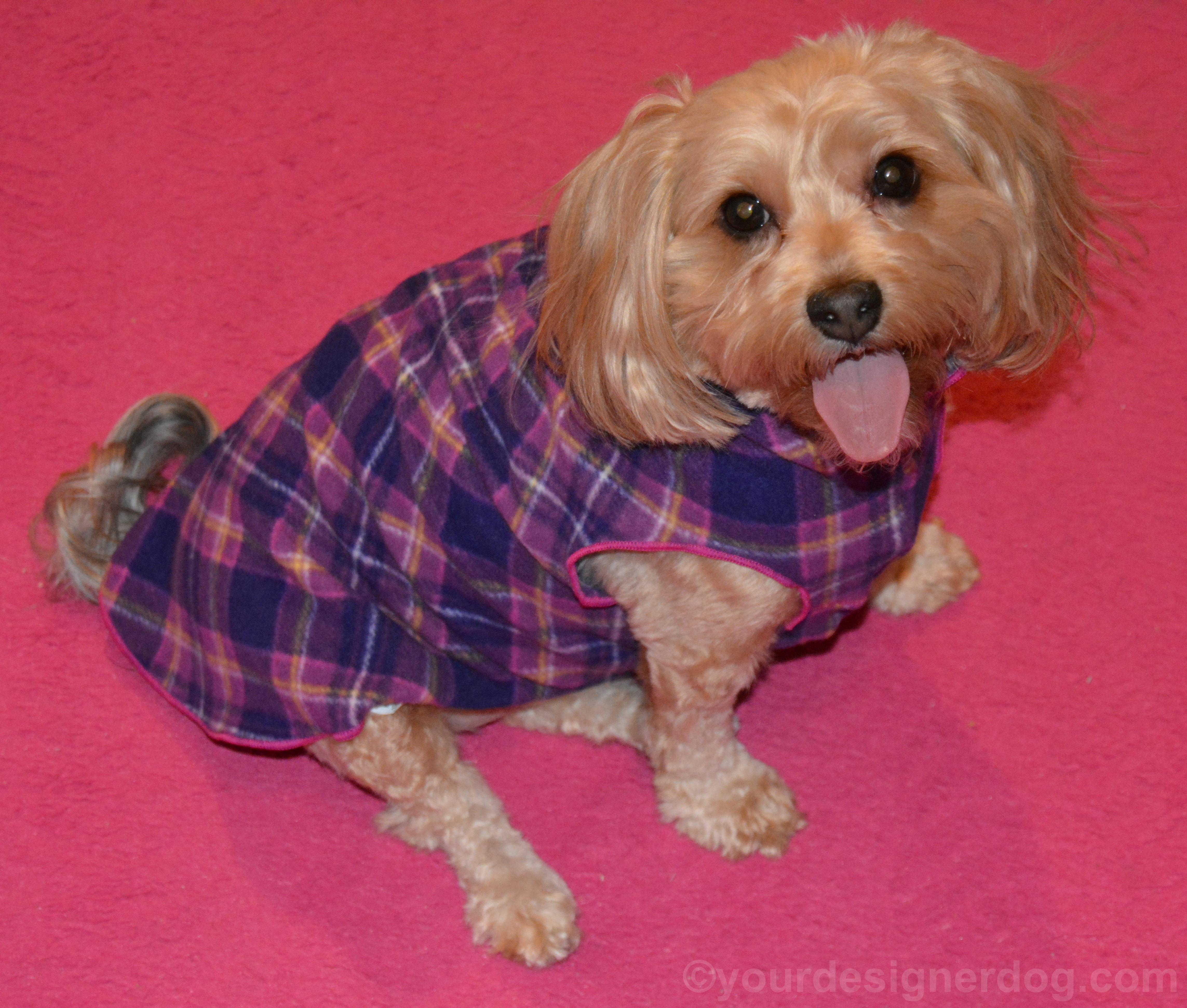Keep Your Dog Warm in a Gold Paw Series Stretch Fleece