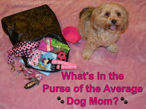 dogs, designer dogs, yorkipoo, yorkie poo, purse, Dog Mom