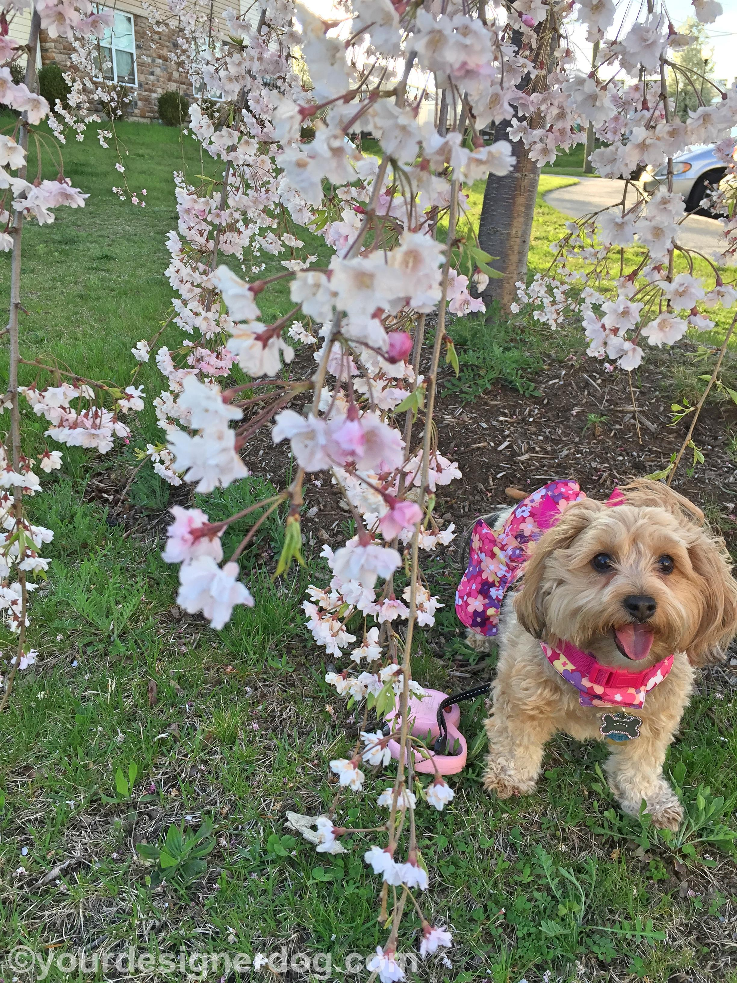 Tongue Out Tuesday Blossoms