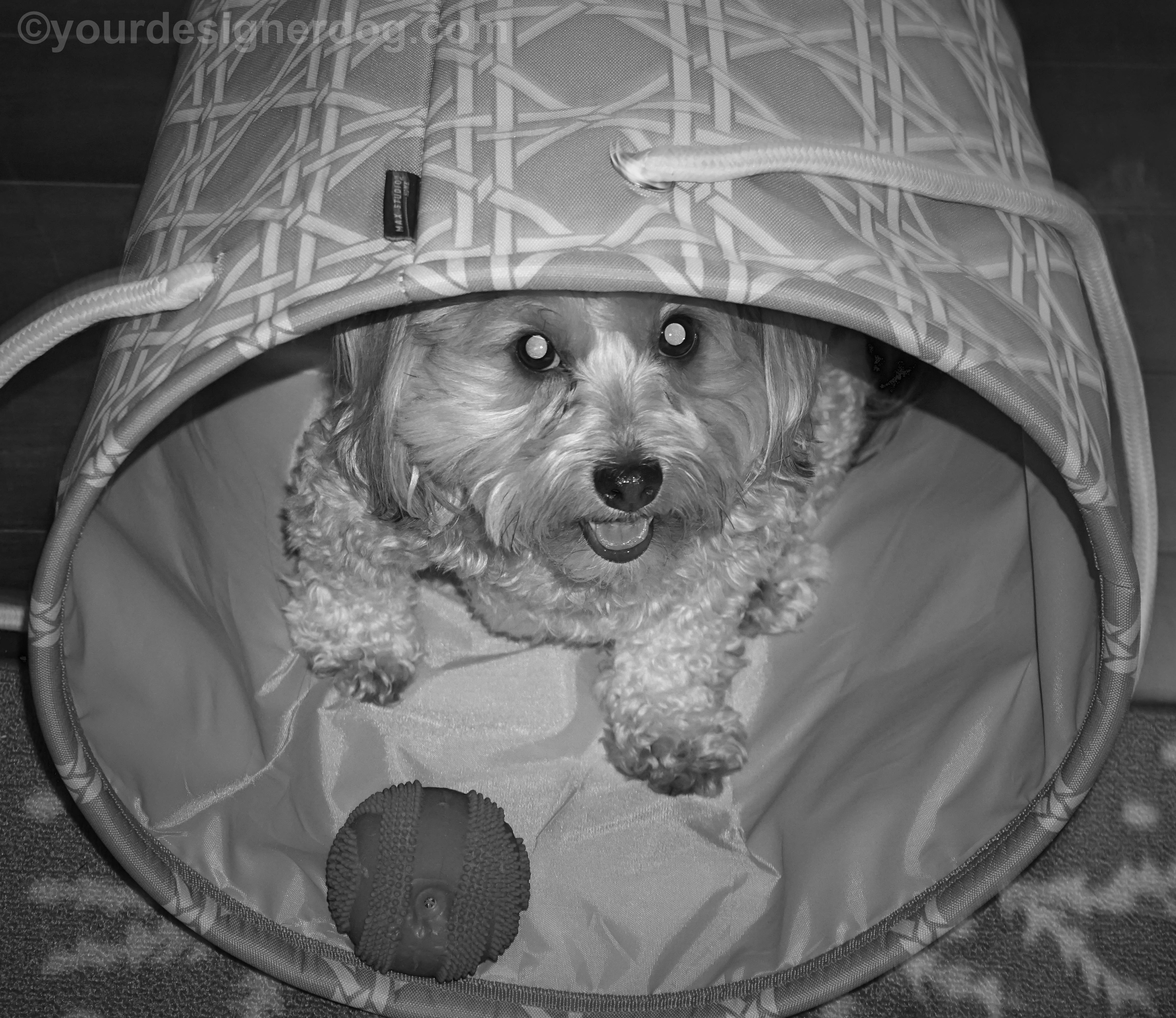 Black and White and in a Basket