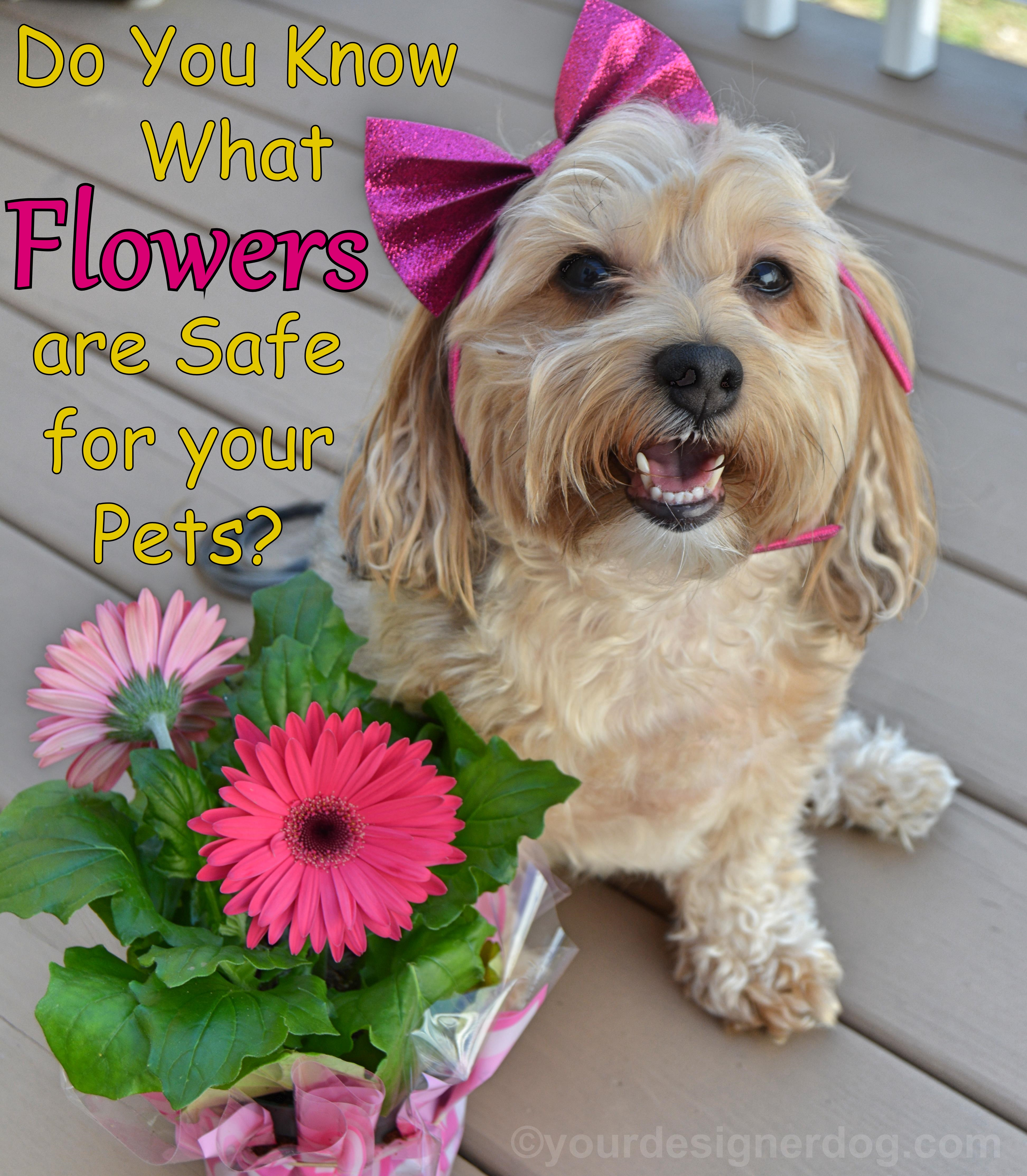 Which Flowers Are Safe For Your Pets?