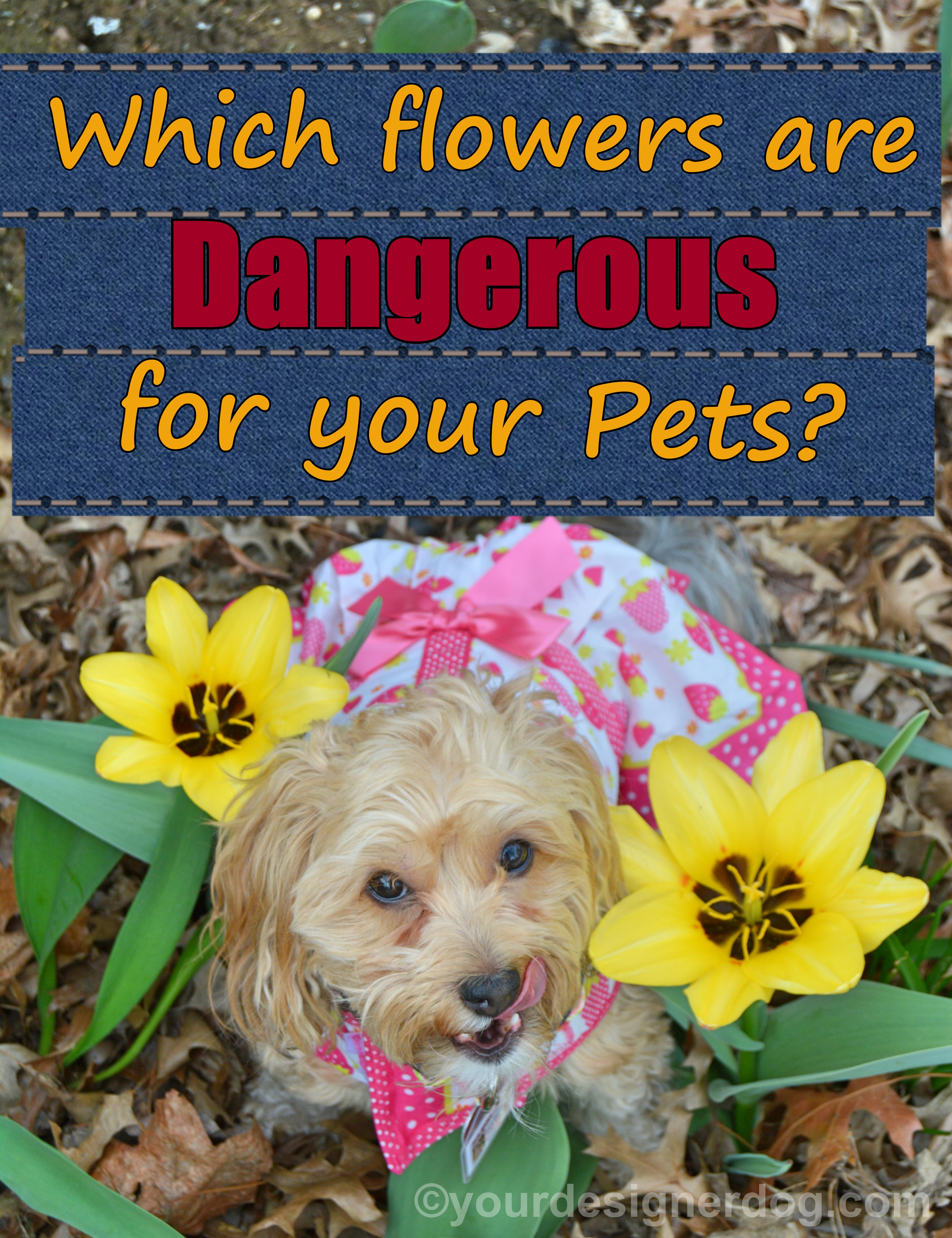 Pretty Flowers Can Be Pretty Dangerous For Pets
