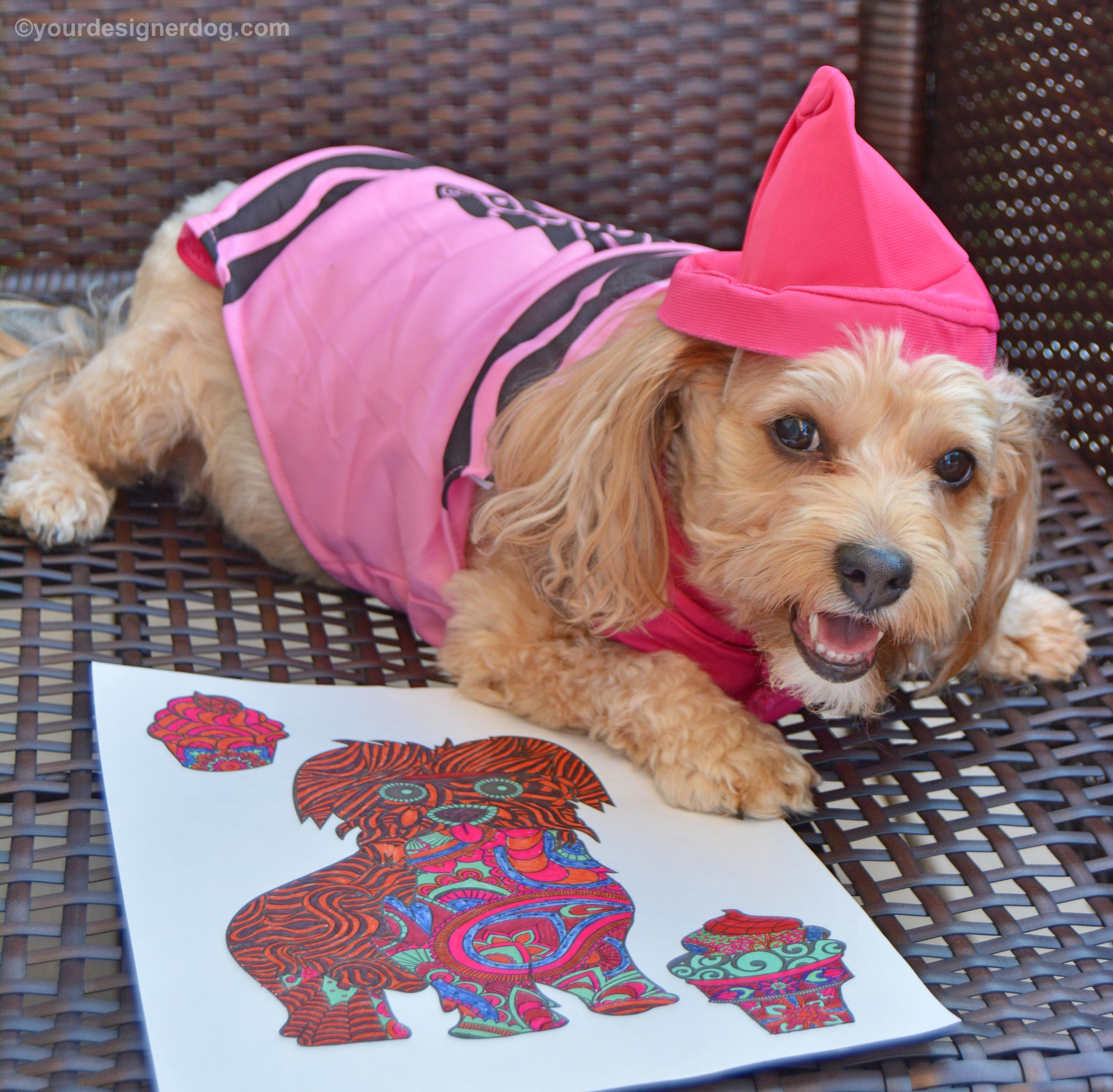 dogs, designer dogs, Yorkipoo, yorkie poo, crayon costume, coloring, national coloring book day